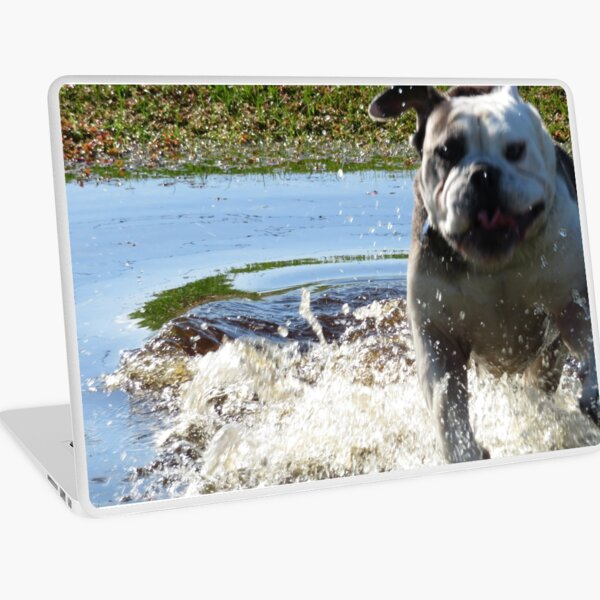 Excited Bulldog in the Water Laptop Skin