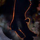 Juvenile batfish - Lembeh Straits by Stephen Colquitt