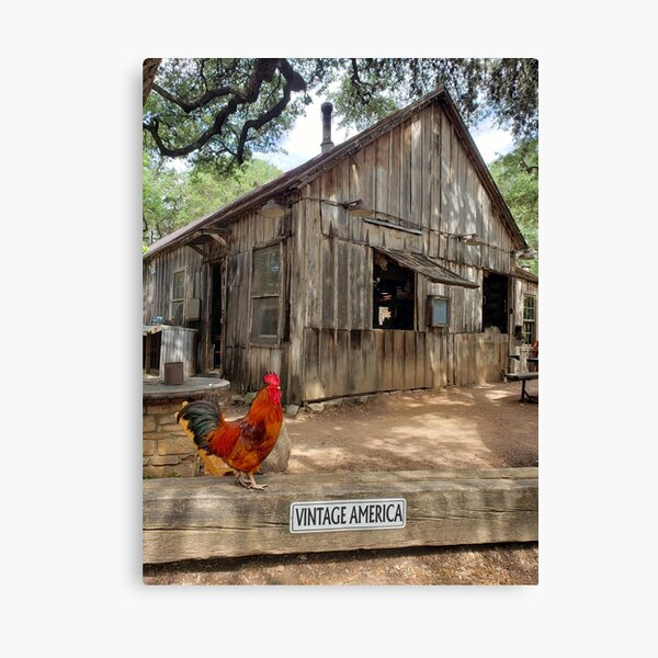 Vintage American rural scene with rooster Canvas Print