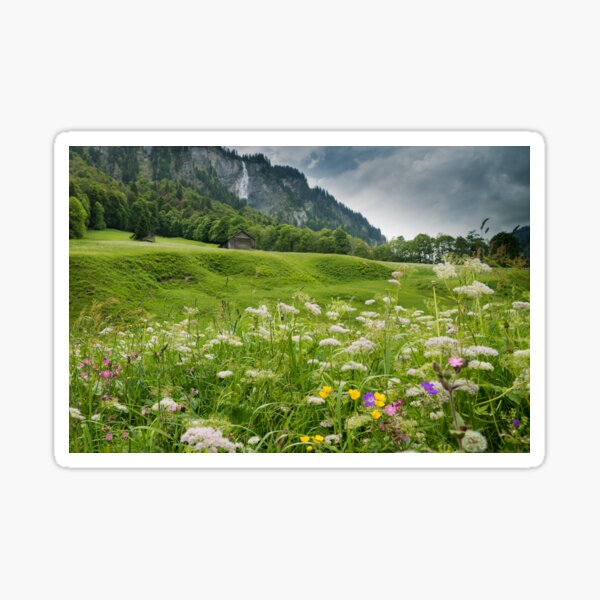White Pine Valley Sticker