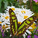 Butterfly in the Flowers by ChelsiGraphics