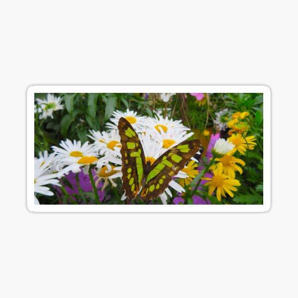 Butterfly in the Flowers Sticker