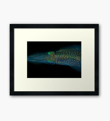 Squid - Lembeh straits Framed Print