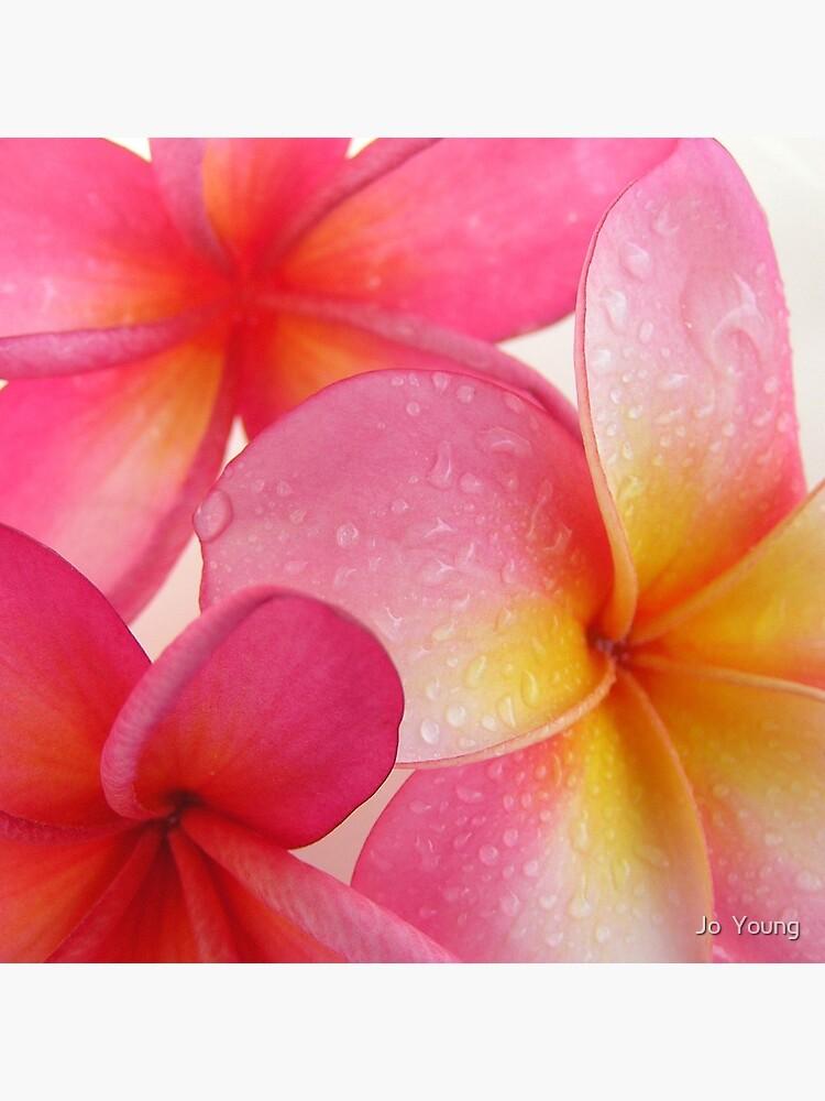 Pink Frangipani by joyoung