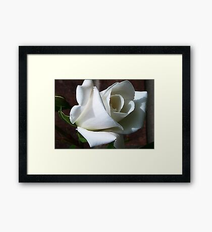 White Rose #2 Framed Print