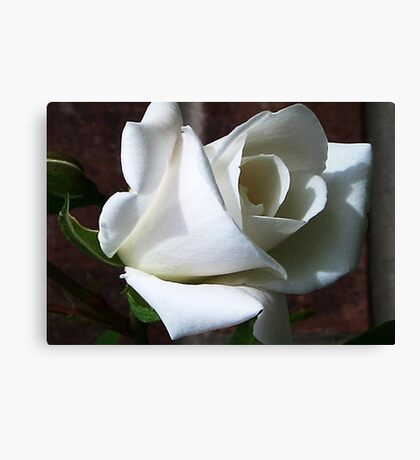 White Rose #2 Canvas Print