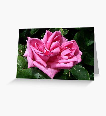 Pink Rose #1 Greeting Card