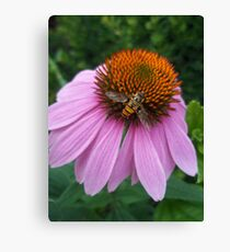 insect & flower Canvas Print