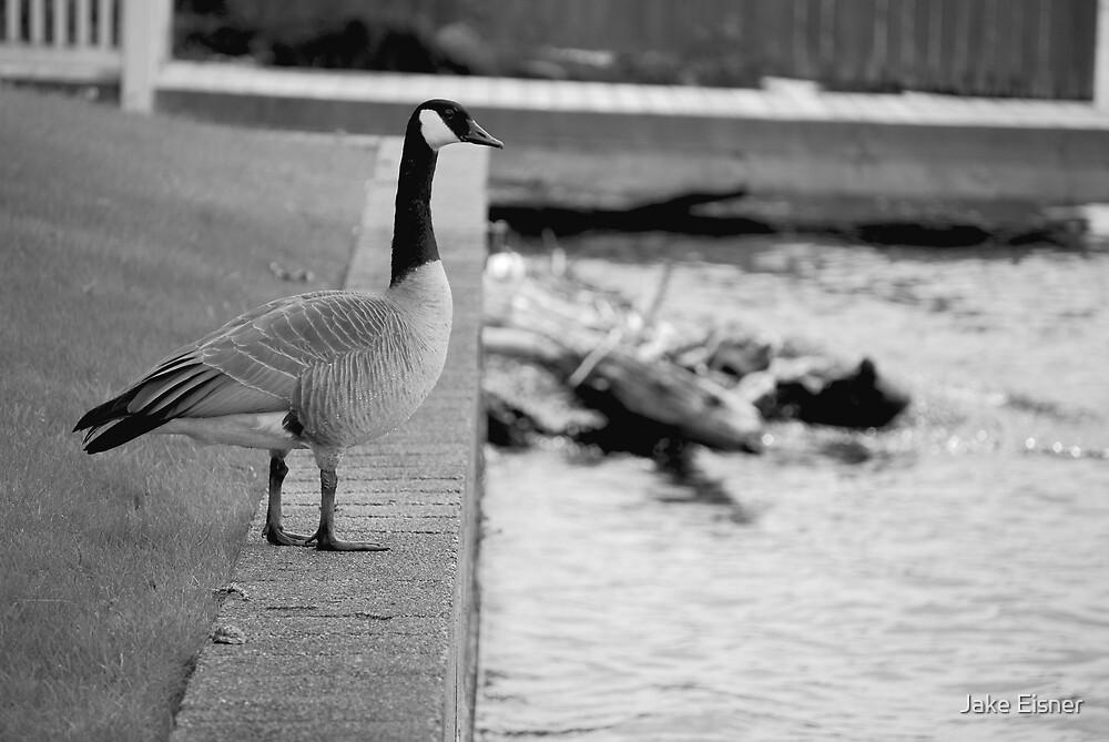 Goose (Award Winning Photo!) by Jake Eisner