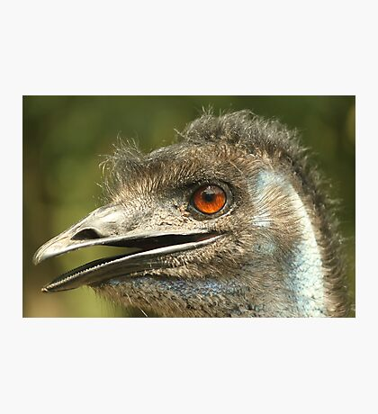 Dirty Emu Photographic Print