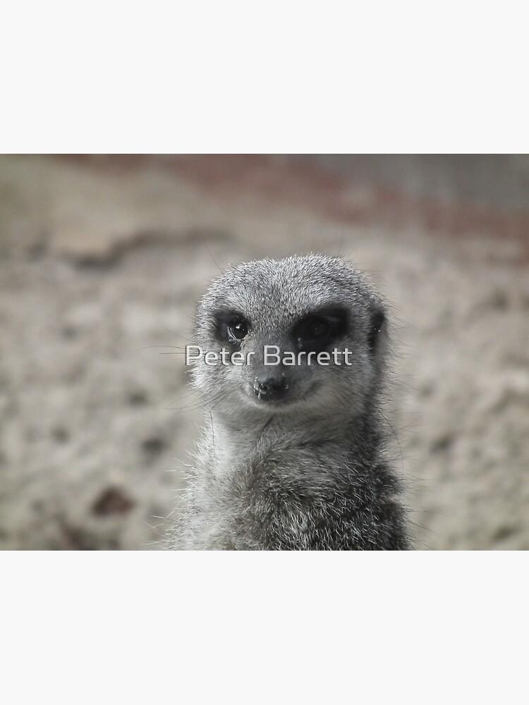 Meerkat 01 by hartrockets