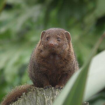Dwarf Mongoose by hartrockets
