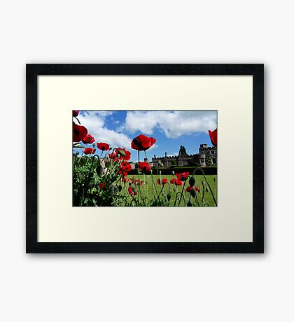 The Dancing Poppies Framed Print