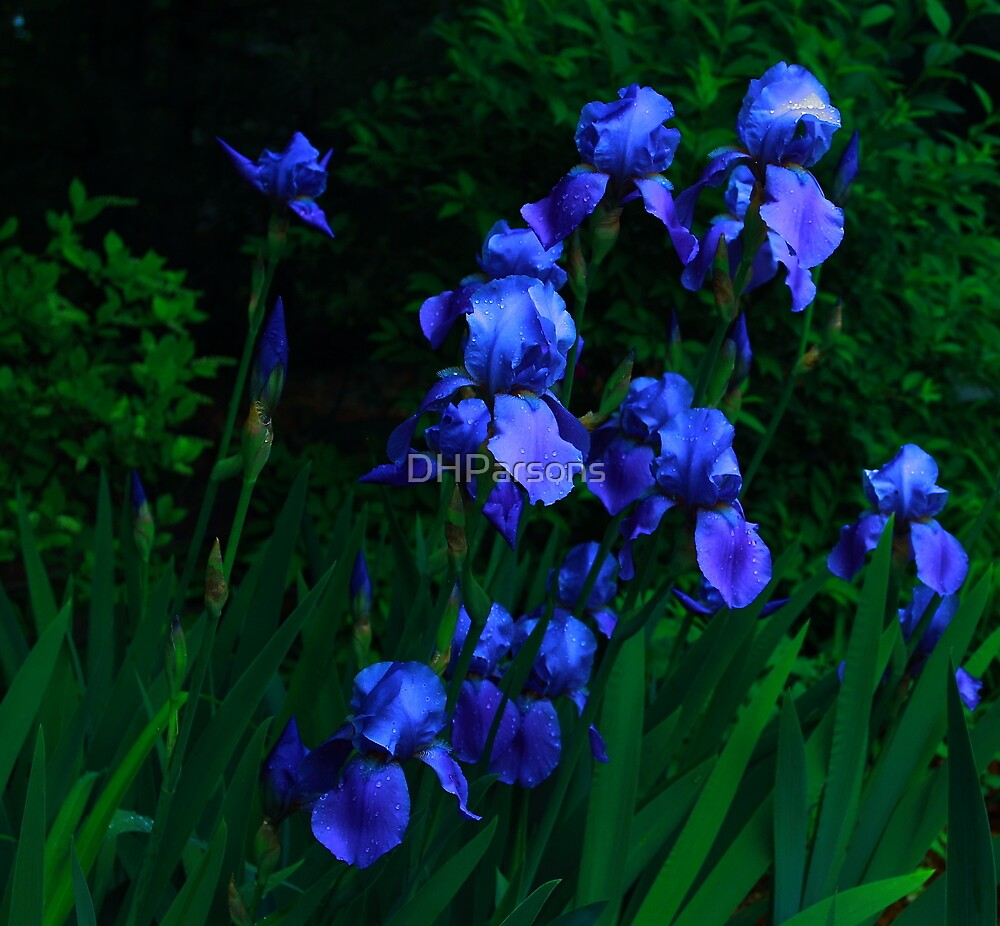 Blue Iris patch by DHParsons