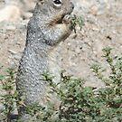 Squirrel by Arla M. Ruggles