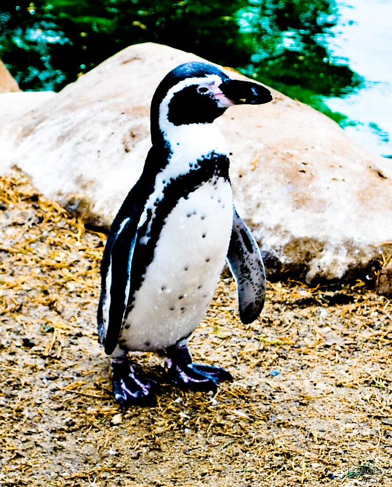 Penguin by Treagie