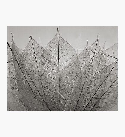skeleton leaves Photographic Print