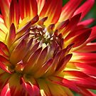 Dazzling Dahlias by Monnie Ryan