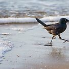 Grackle at the Beach by EthanQuin