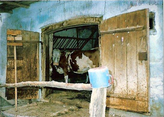 A Cow in Croatia by Diane  Marie Kramer