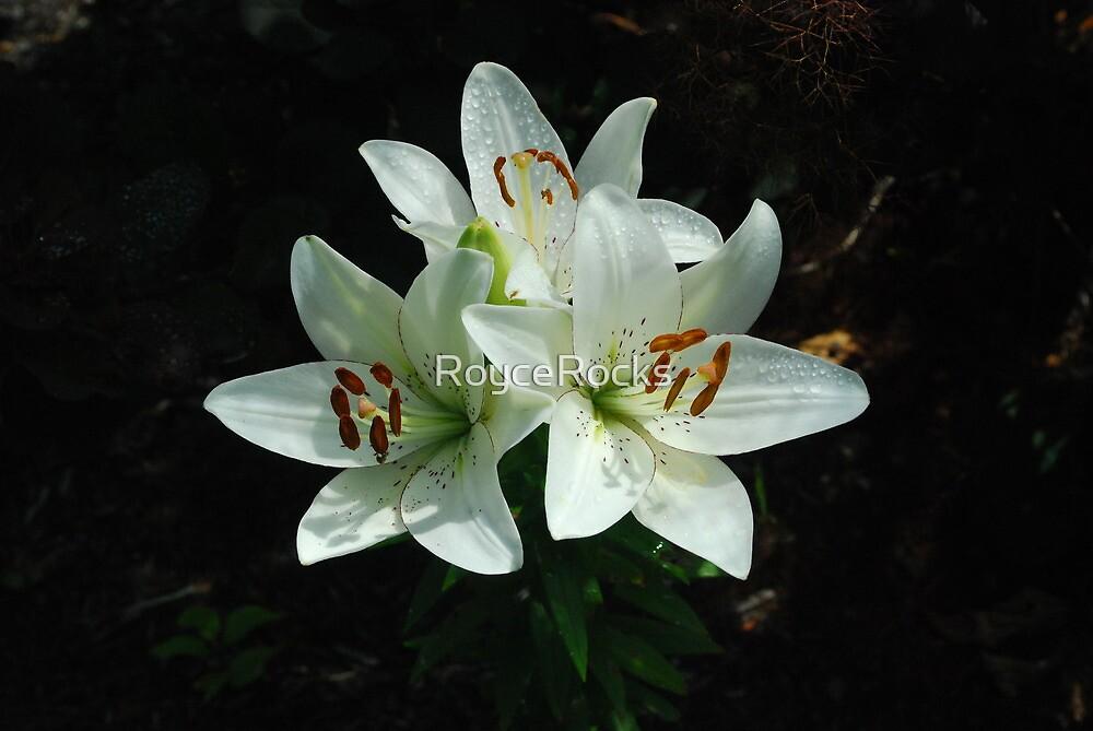 Eye-liner Lilies 2010 by RoyceRocks