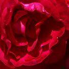 Rose by Andrew Brockinton