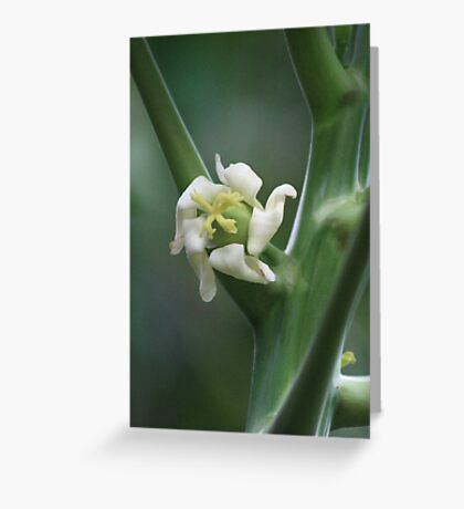 Papaya Flower Greeting Card