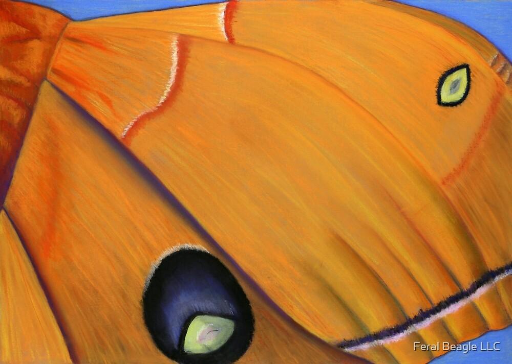 Owl Moth by Feral Beagle LLC