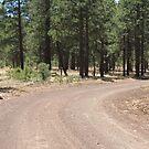 Curvey, Arizona dirt road by ChelsiGraphics