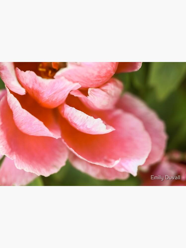 Pink Peony by PeaceAndBeauty