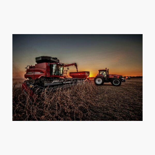Bean Harvest at Sunset Photographic Print
