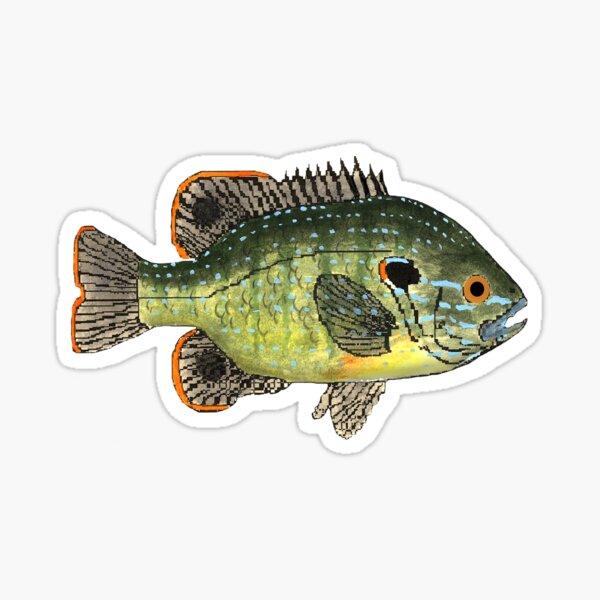 Green Sunfish Sticker