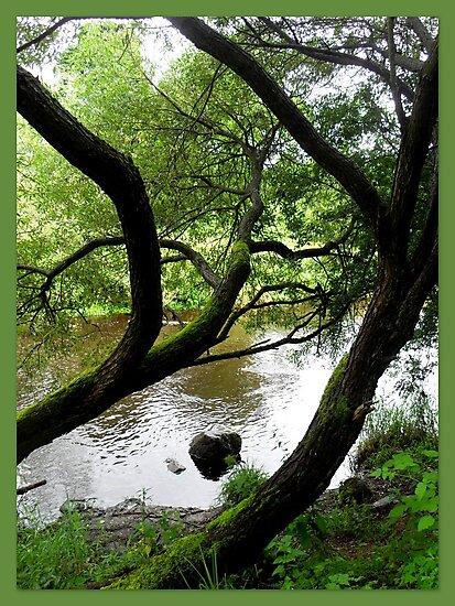 A river runs through it  by ©The Creative  Minds