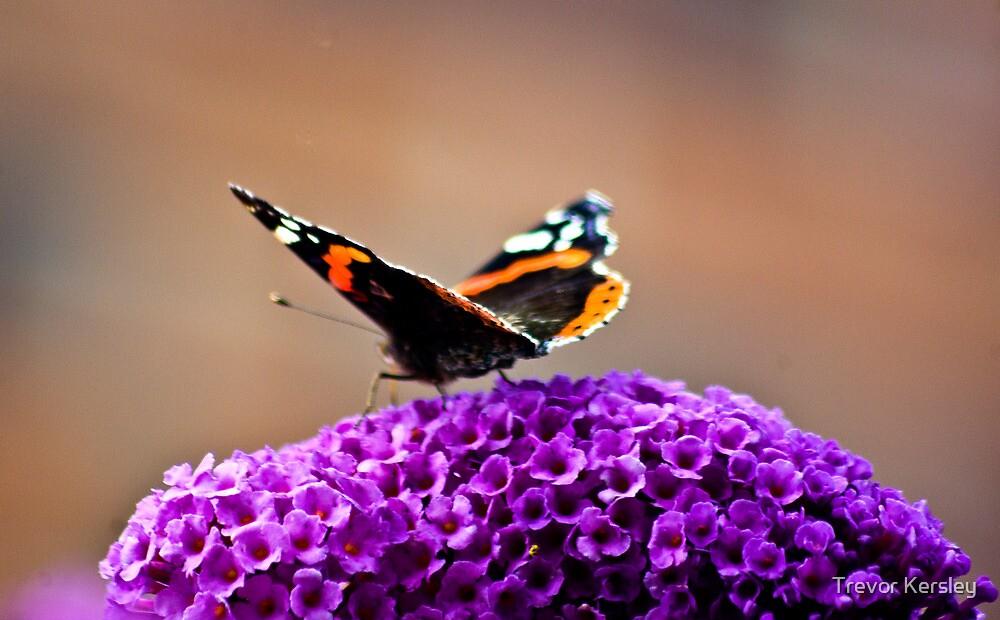 Butterfly & Lilac #2 by Trevor Kersley