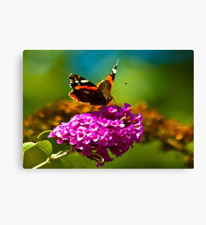 Butterfly & Lilac #3 Canvas Print