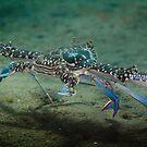 Crab dash - Lembeh Straits by Stephen Colquitt