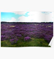 Heather on the Moors. Poster