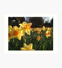 Field of Spring Bulbs Art Print