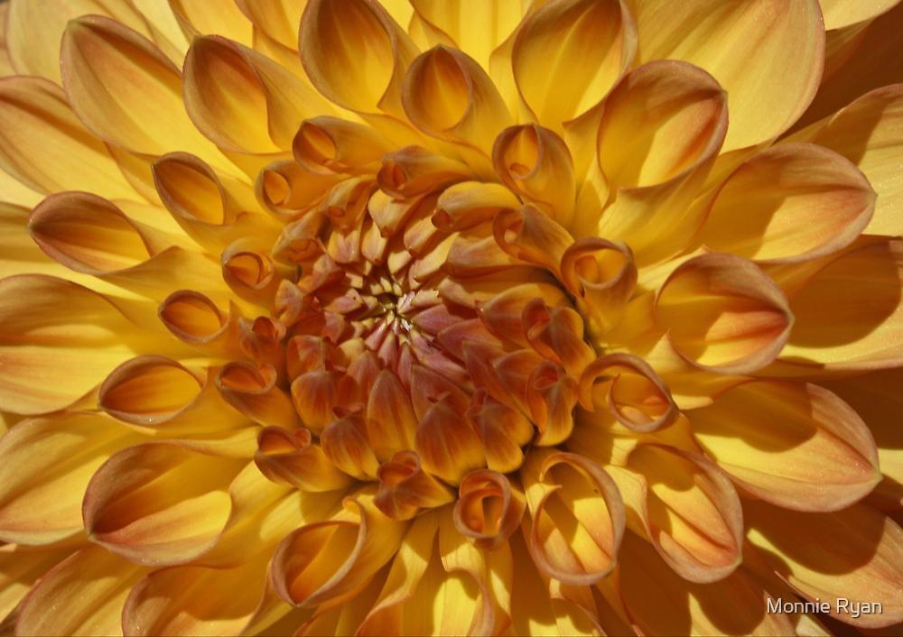 Golden Sunshine by Monnie Ryan