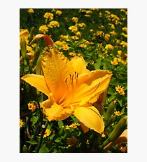 Playful Lilly Photographic Print