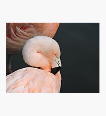 Pink With Desire Photographic Print
