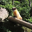 Golden Afternoon (Yellow Throated Marten) by CreativeEm