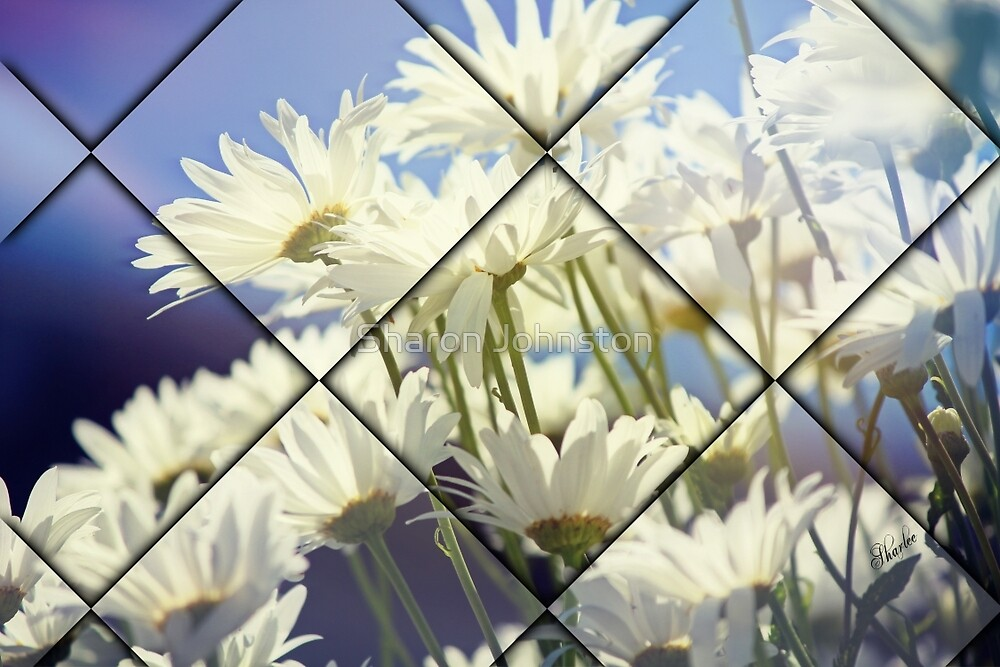 Daisies by Sharon Johnston