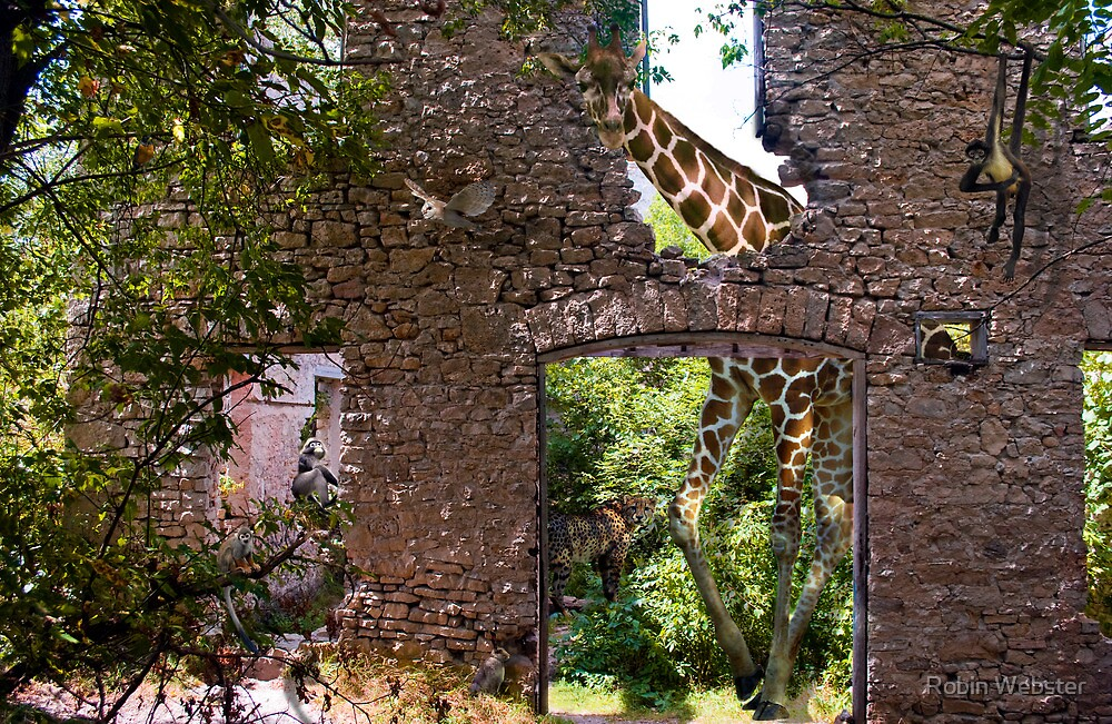 Reclaimed Ruins by Robin Webster