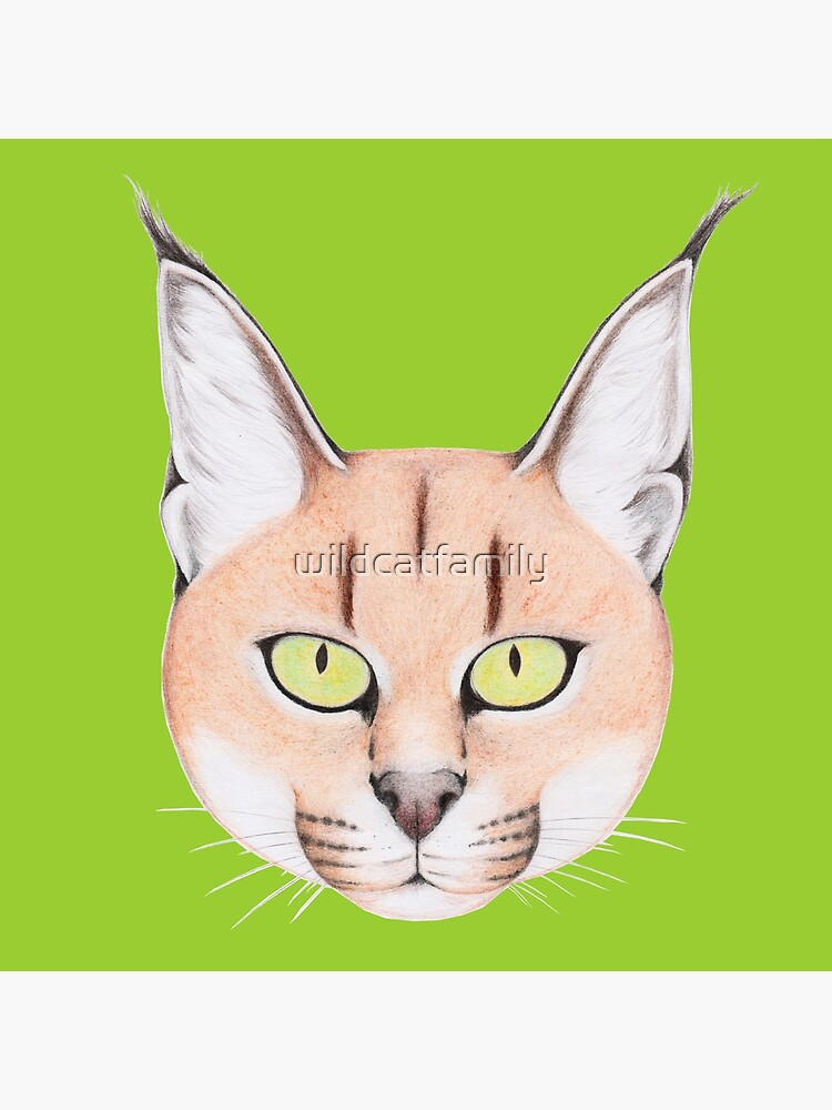 African Caracal Cat by wildcatfamily