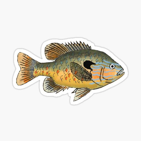 Longear Sunfish Sticker