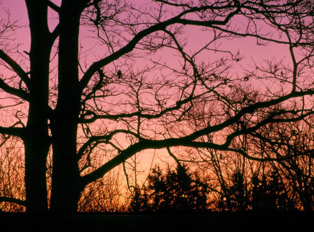 Early dawn - Berwick, Nova Scotia by Harv Churchill