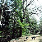 Rottweilers on Walkies by AndrewPS3Panda
