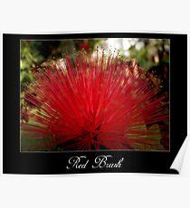 Red brush flower Poster