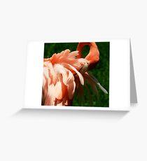 Flamingo at Jungle Gardens Greeting Card